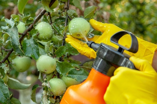 Опрыскивание растений крапивным отваром