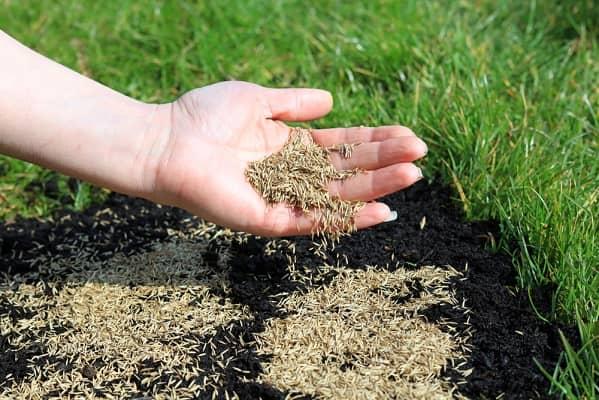 Посев газонов