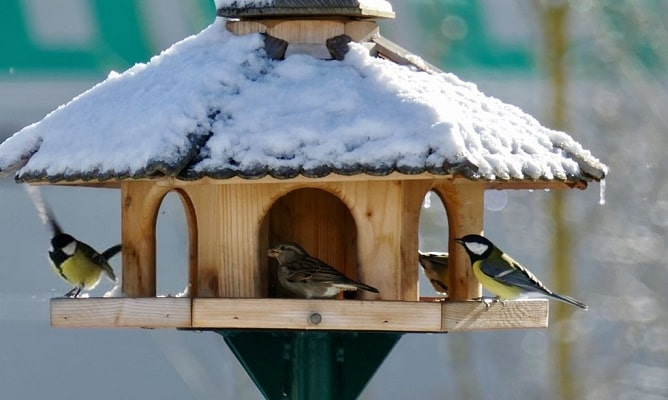 Кормушка для разных видов птиц