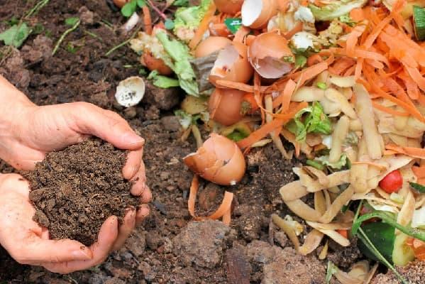 Органические удобрения в саду