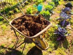 Органические удобрения в саду и огороде
