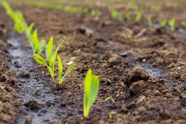 Подкармливаем растения органическими удобрениями