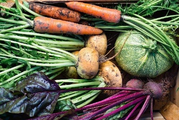 Хранение овощей из сада