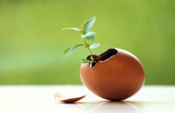 Яичная скорлупа в саду