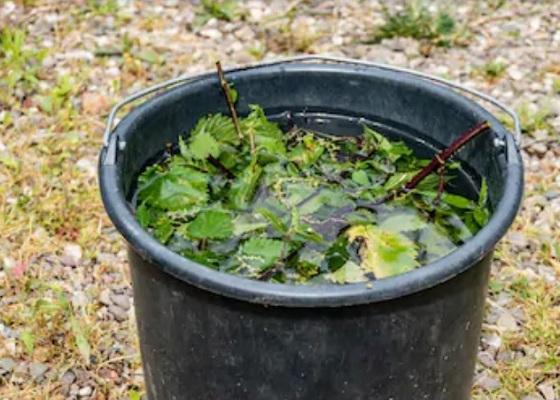 Органическое удобрение из крапивы
