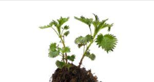 Удобрение из органики