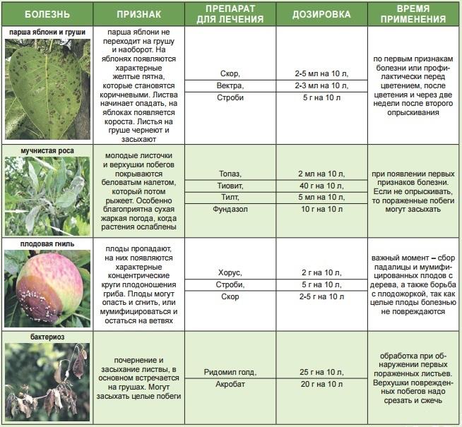 осмотр растений на предмет вредителей