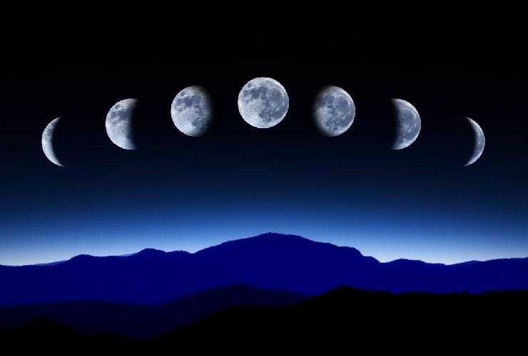 Фазы луны имеют значение для посадки растений в саду