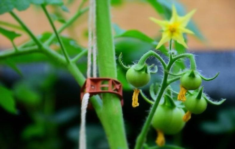 пластиковые клипсы для подвязки помидор