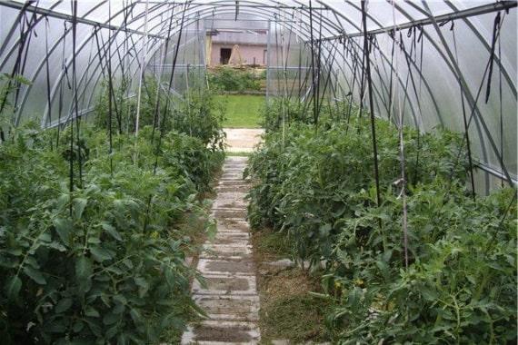 Подвязка томатов линейным способом